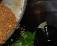 Adding the Spices