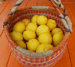 Fresh Lemons Ready to be preserved.