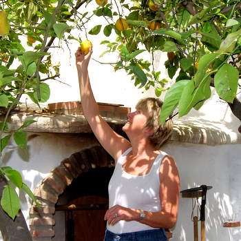 Pam Picks the Marmalade Lemons